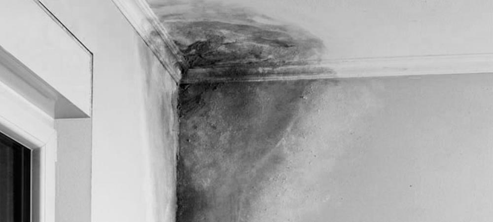 Qué cubre la garantía de daños por agua en viviendas y empresas?