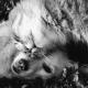 gato perro amigos seguro mascotas aseguradora